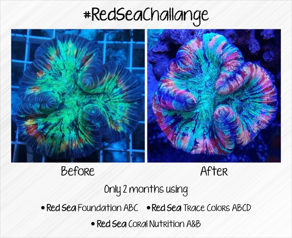 Red Sea Full additives Results (2 Months) Aefbe010