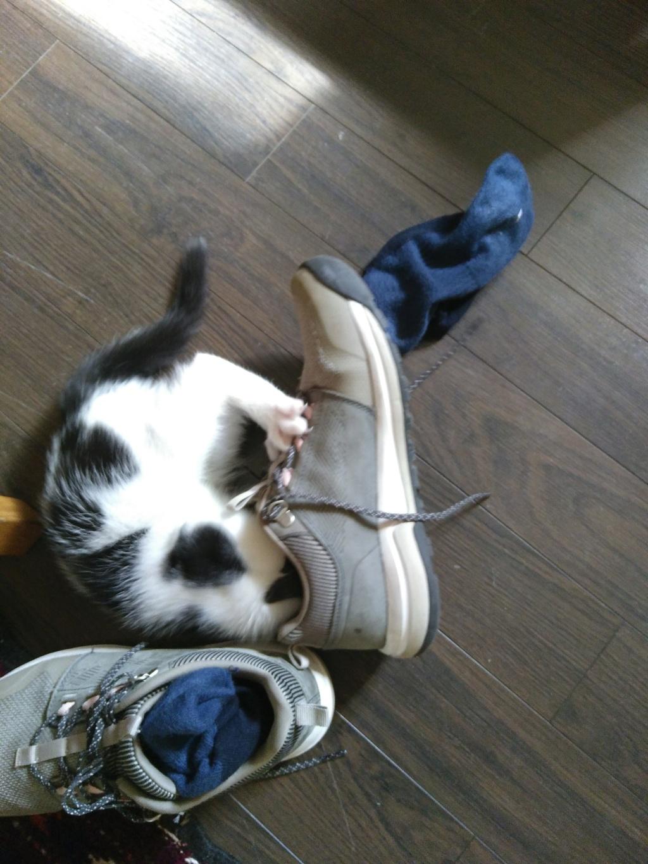 Des écrivain·e·s et des chats (avec des photos) Img_2019