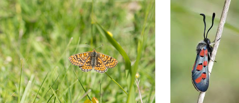 Voici venu le temps, des papillons dans les champs…  Image110
