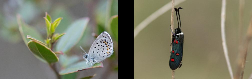 Voici venu le temps, des papillons dans les champs…  Image210