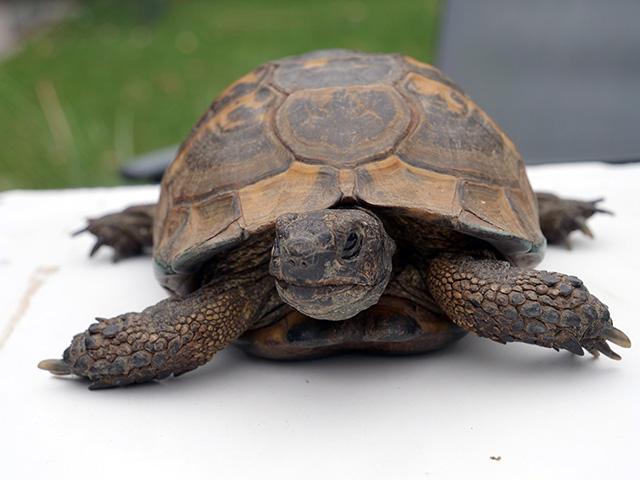 identification nouvelle tortue Avant612
