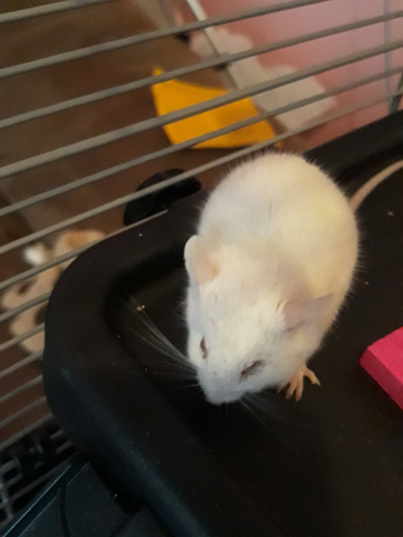 I think my mouse is ill 20201213