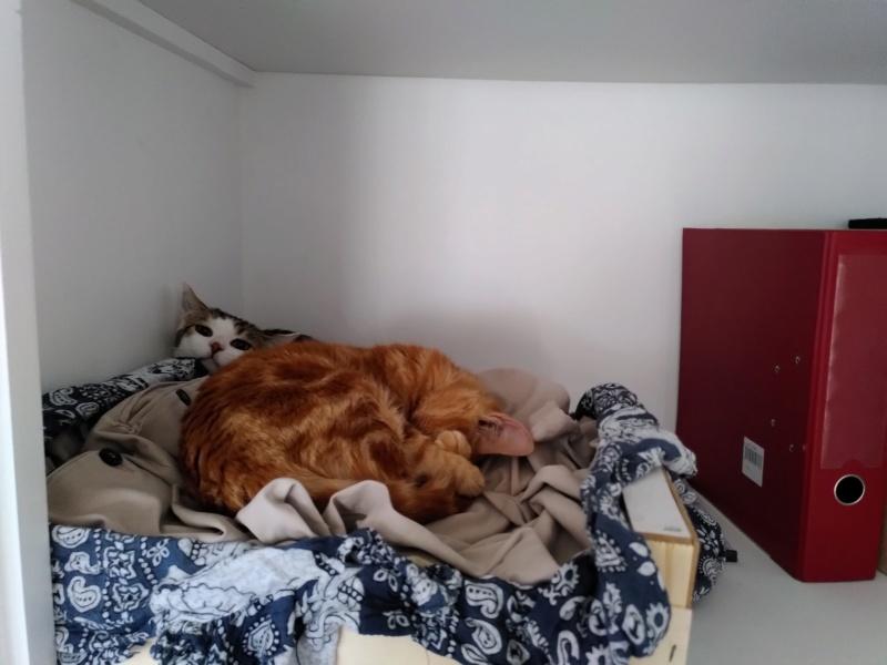 BURBERRY (chaton femelle  rousse europeenne) Img_2018