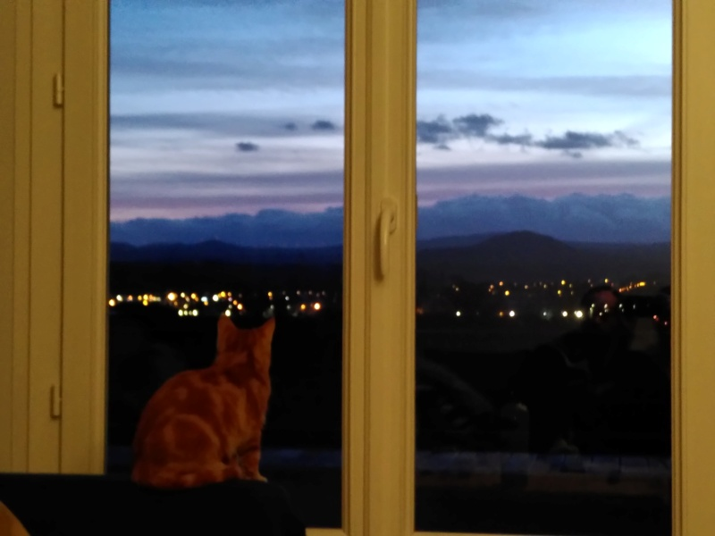 BURBERRY (chaton femelle  rousse europeenne) Img_2019