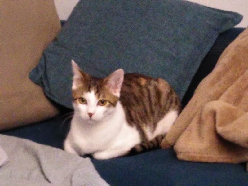 BURBERRY (chaton femelle  rousse europeenne) Img_2020