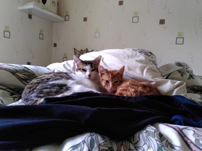 BURBERRY (chaton femelle  rousse europeenne) Img_2023