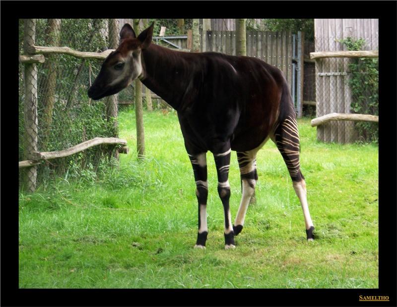 Le zoo de Rotterdam 001110