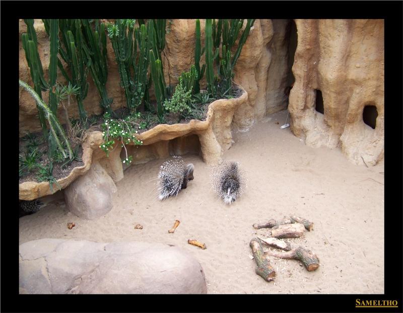 Le zoo de Rotterdam 022211