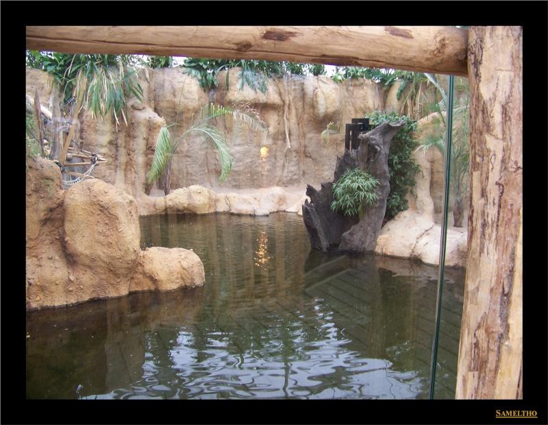 Le zoo de Rotterdam 026110