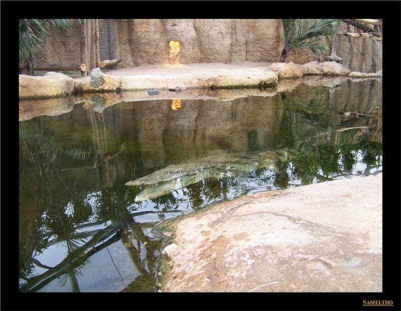 Le zoo de Rotterdam 029110