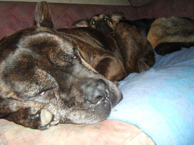 Torsion de l'estomac: ma Royce est entre la vie et la mort Dscf3818