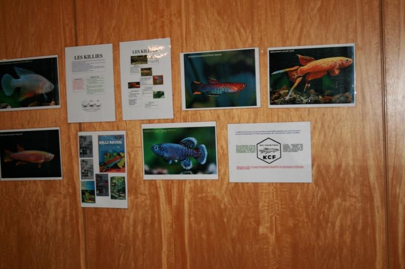 Bourse tous poissons St Saulve 2013 Img_6814
