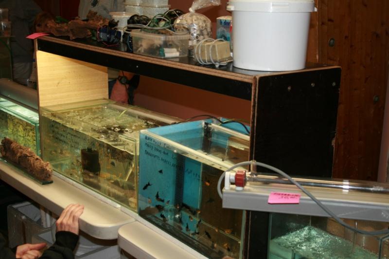 Bourse tous poissons St Saulve 2013 Img_6826