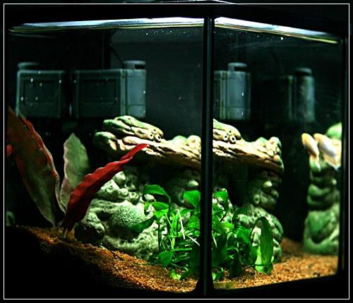 Aquariums à thèmes ~ Postez vos photos ~ - Page 4 115910