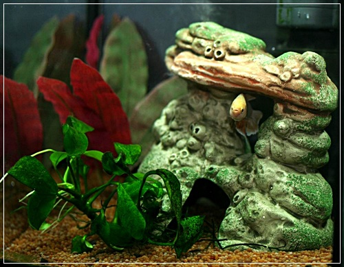 Aquariums à thèmes ~ Postez vos photos ~ - Page 4 116410