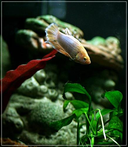 Aquariums à thèmes ~ Postez vos photos ~ - Page 5 116910