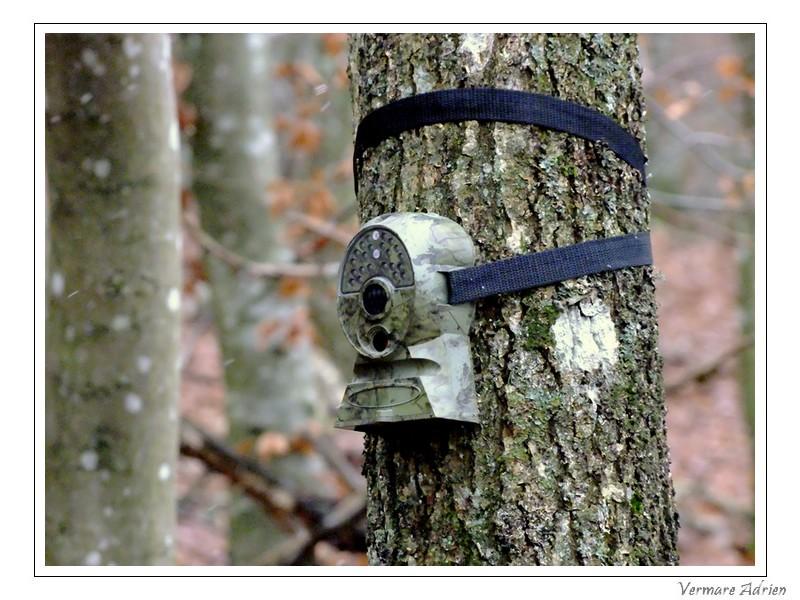 Appareil photo / vidéo automatique ! Dscf4410