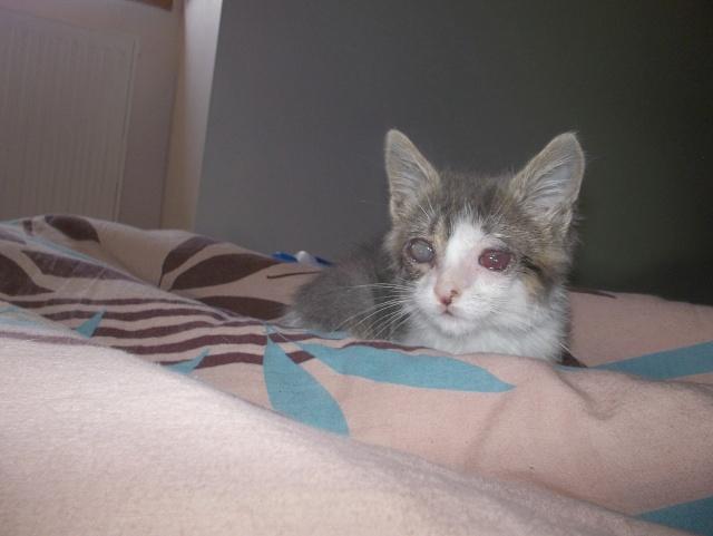 Mise à jour de mes chats 100_3111
