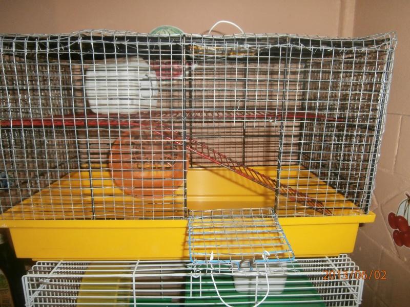 Une cage jenny et deux cages pour souris Mallo138
