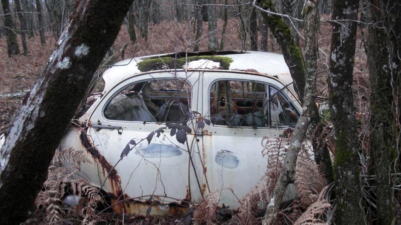 Une Panhard dans les bois... Cimg0413
