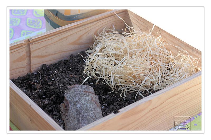 Naissance d'une petite tortue. 6_sept11