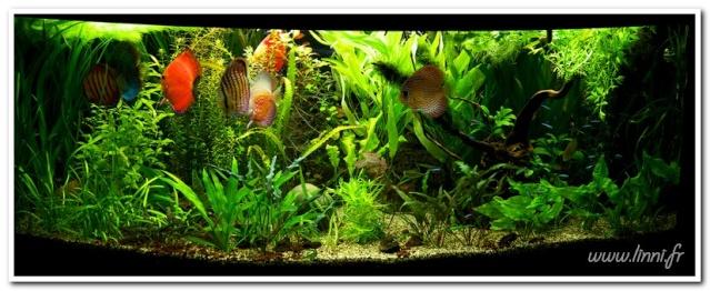 Notropis chrosomus P.42 - Page 4 Aquari18