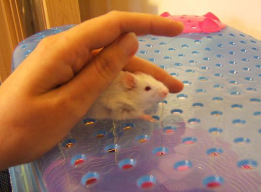 Plein de petites souris à l'adoption ! Malous12