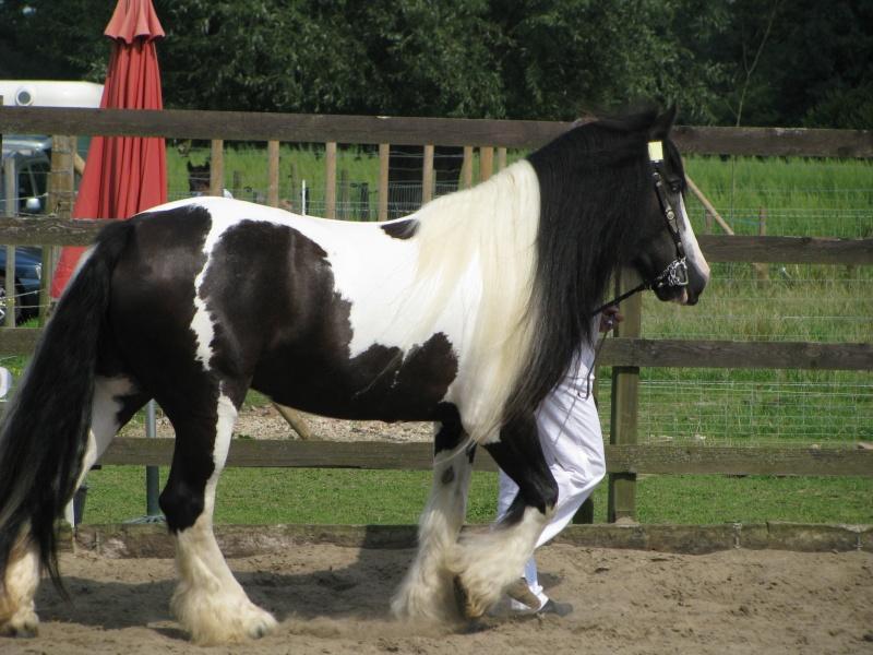 Mes chevaux... _conco16