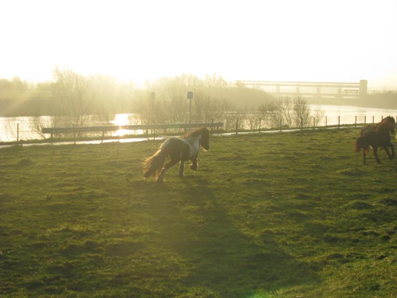 Mes chevaux... Chevau51