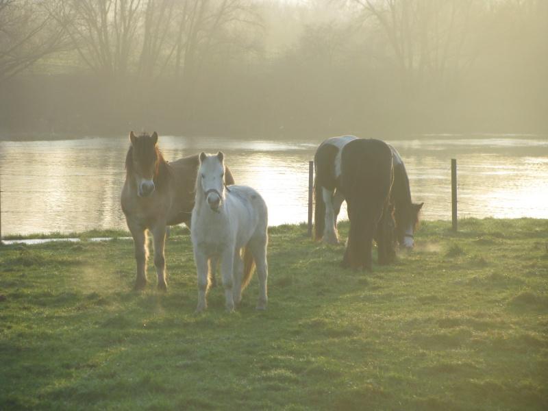Mes chevaux... Chevau52