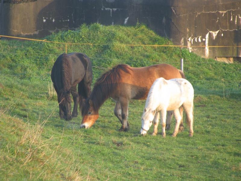 Mes chevaux... Chevau53