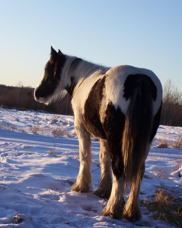 Gypsies et clydes dans la neige ...au québec !!! (new p3) 100_7010