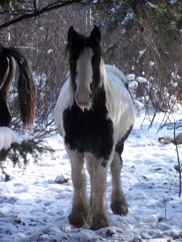 Gypsies et clydes dans la neige ...au québec !!! (new p3) 100_7012