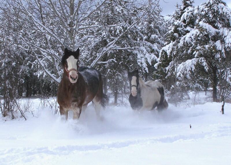 Gypsies et clydes dans la neige ...au québec !!! (new p3) 100_7210