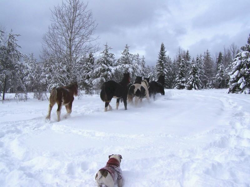 Gypsies et clydes dans la neige ...au québec !!! (new p3) 100_7211