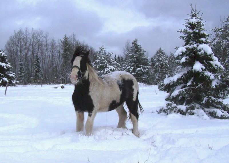 Gypsies et clydes dans la neige ...au québec !!! (new p3) 100b7310