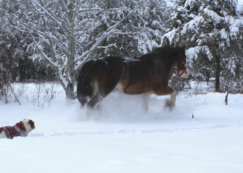 Gypsies et clydes dans la neige ...au québec !!! (new p3) Bufff11