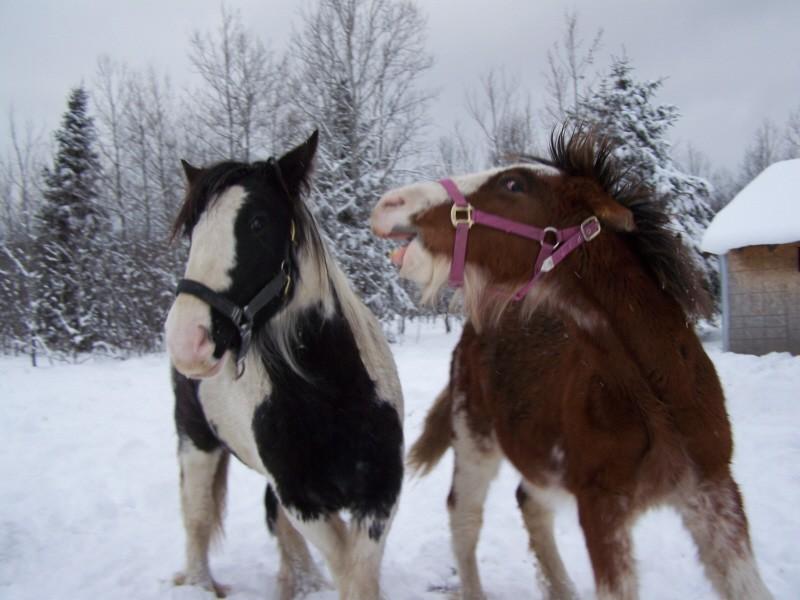 Gypsies et clydes dans la neige ...au québec !!! (new p3) Girls_10
