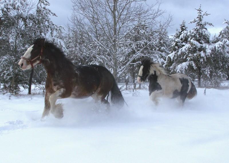 Gypsies et clydes dans la neige ...au québec !!! (new p3) Tam_et10