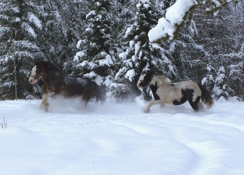 Gypsies et clydes dans la neige ...au québec !!! (new p3) Tam_et11