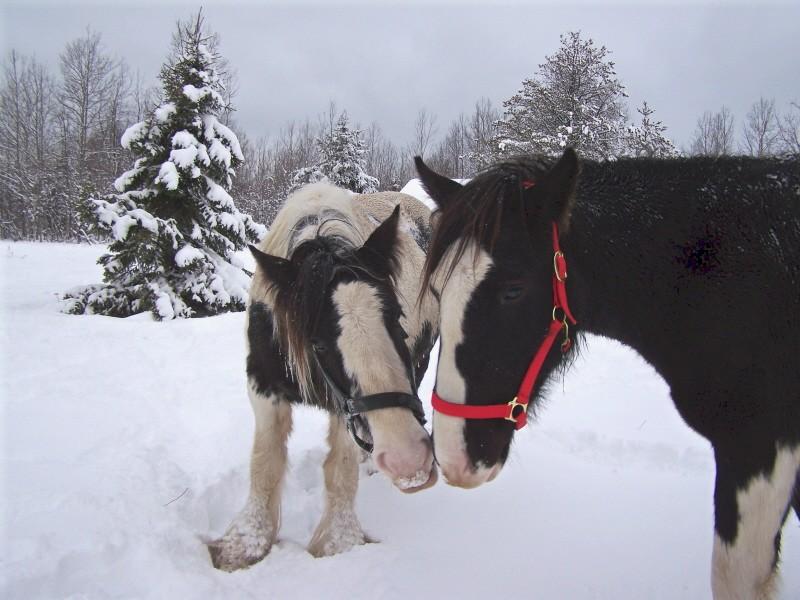 Gypsies et clydes dans la neige ...au québec !!! (new p3) Tam_et13