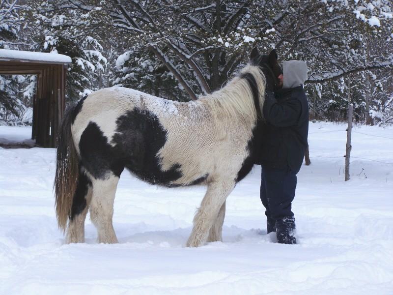 Gypsies et clydes dans la neige ...au québec !!! (new p3) Tam_et15