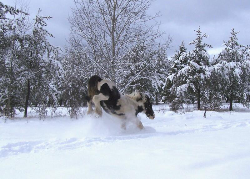 Gypsies et clydes dans la neige ...au québec !!! (new p3) Tam_fu10