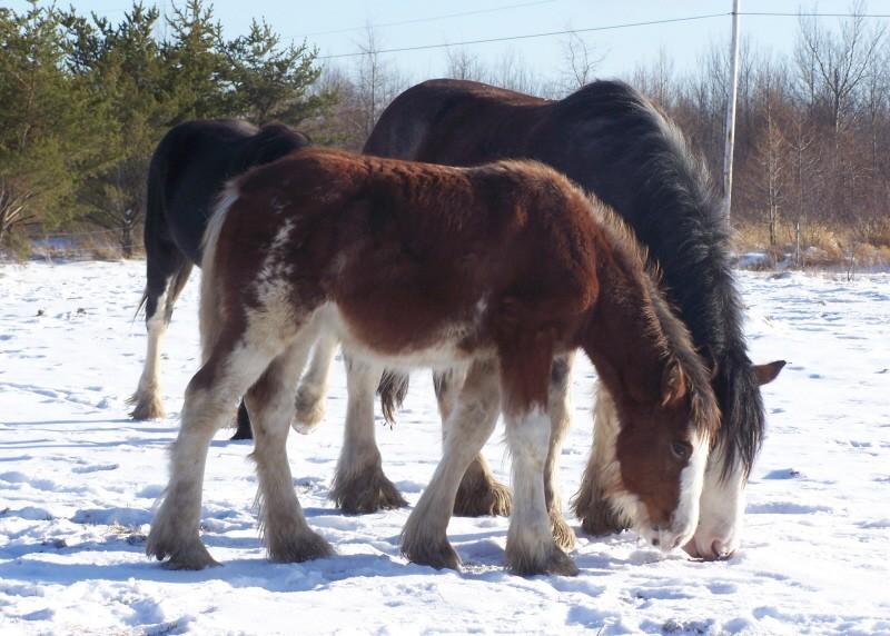 Gypsies et clydes dans la neige ...au québec !!! (new p3) Try_to10