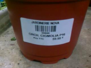 identification de cette orchidée Image_13