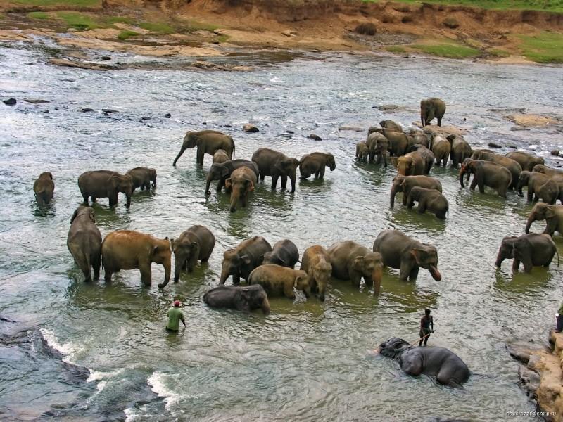 [SRI LANKA] - Les belles vues du Sri Lanka 44468610