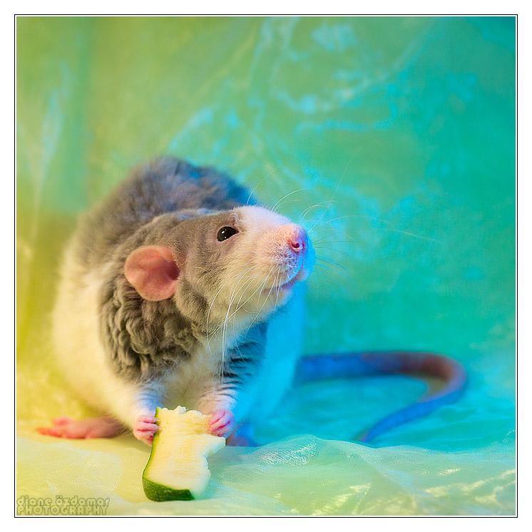 Qui a un rat Velours? Img_4313