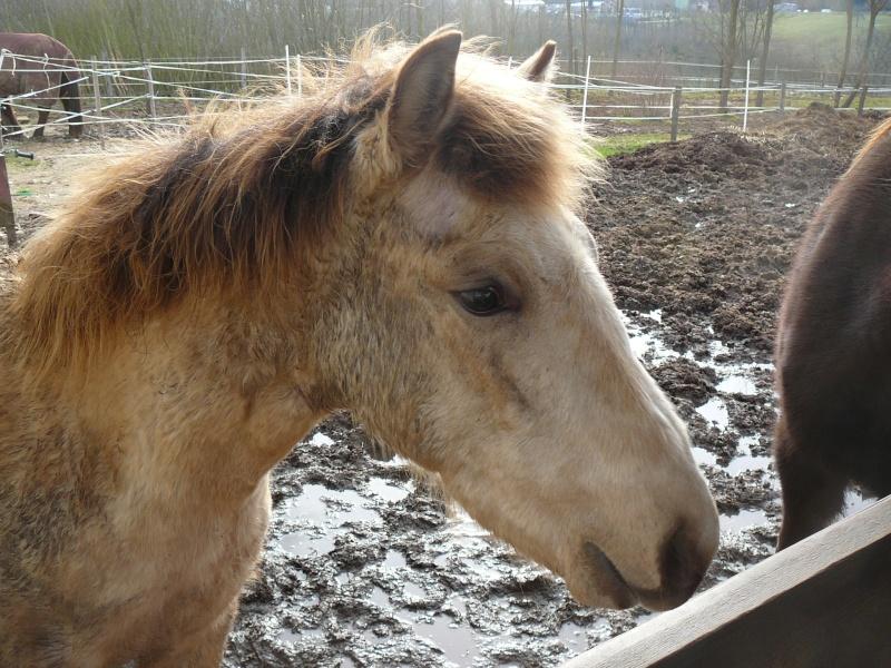 CHADOW - ONC Poney né en 2012 - adopté en septembre 2013 par Charlotte P1010513
