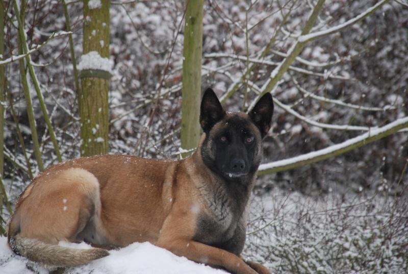 vega & chihuahua sous la neige Dsc_0010