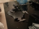 [eldar - peinture]Eldar academy! Black or white, an Eldar still roxx like an Eldar =D 20130310